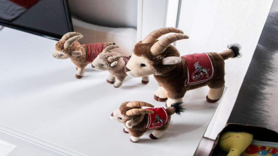A stuffed version of Koln mascot Hennes