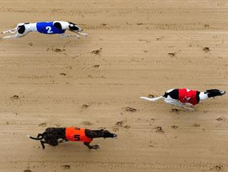 peterborough dogs betting tips