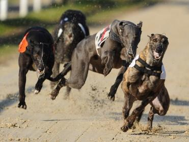 Timeform's Greyhound tipsters have three more bets for you for tonight's action