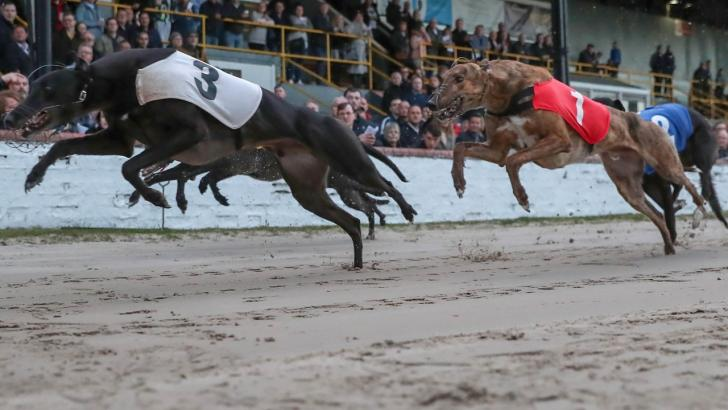 Greyhound race action