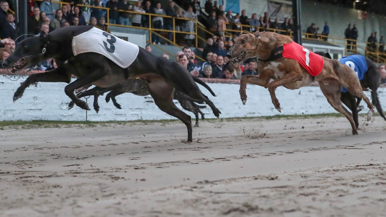 East anglian greyhound derby 2021 betting websites jimmy the greek sports betting