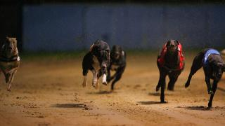 Greyhound racing