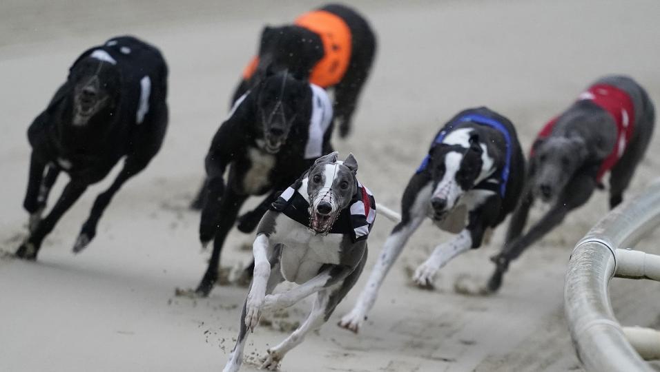 Greyhound derby 2021 betting odds 3 card brag betting rules texas