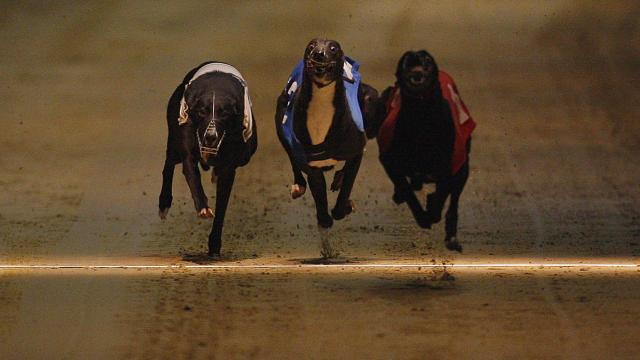 Monmore puppy derby 2021 betting cryptocurrency quotes