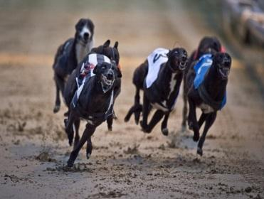 The Lord has recommended eight bets from the racing at Shelbourne Park tonight