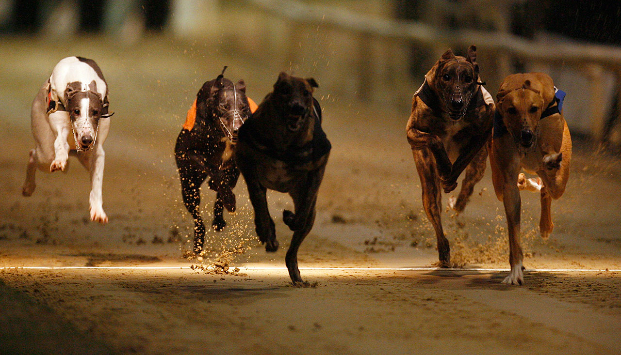 East anglian greyhound derby betting site