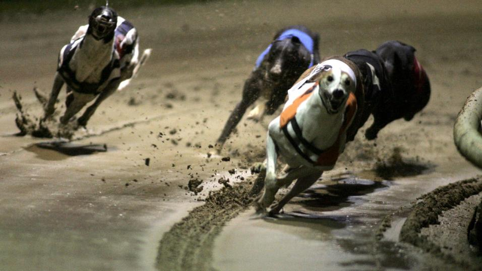 Sky Sports cameras head to Perry Barr for the St Leger final