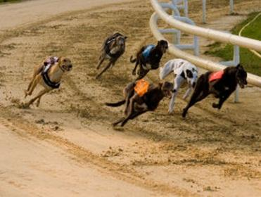 shawfield greyhounds betting tips