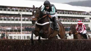 Altior racing at Cheltenham last year