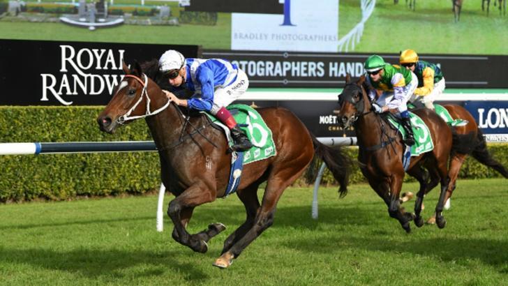 Oz horse racing australia betting betting line of nfl games