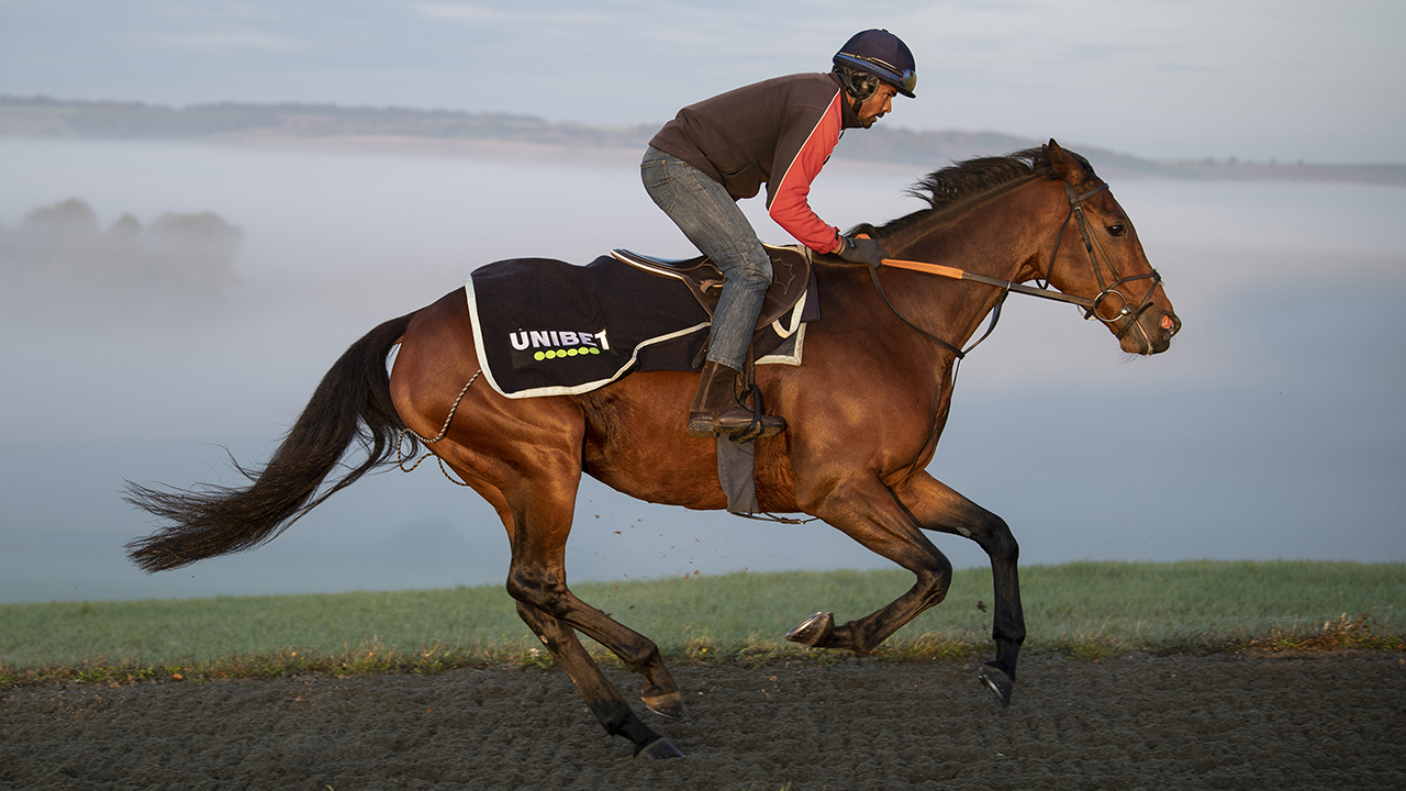 Champ on gallops 1280.jpg