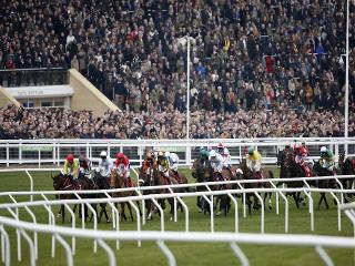 There are nine races at Cheltenham (above) on Saturday