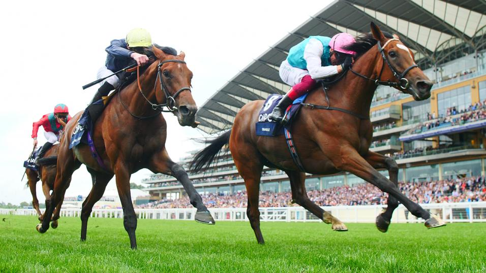 Enable Horse Racing Finish