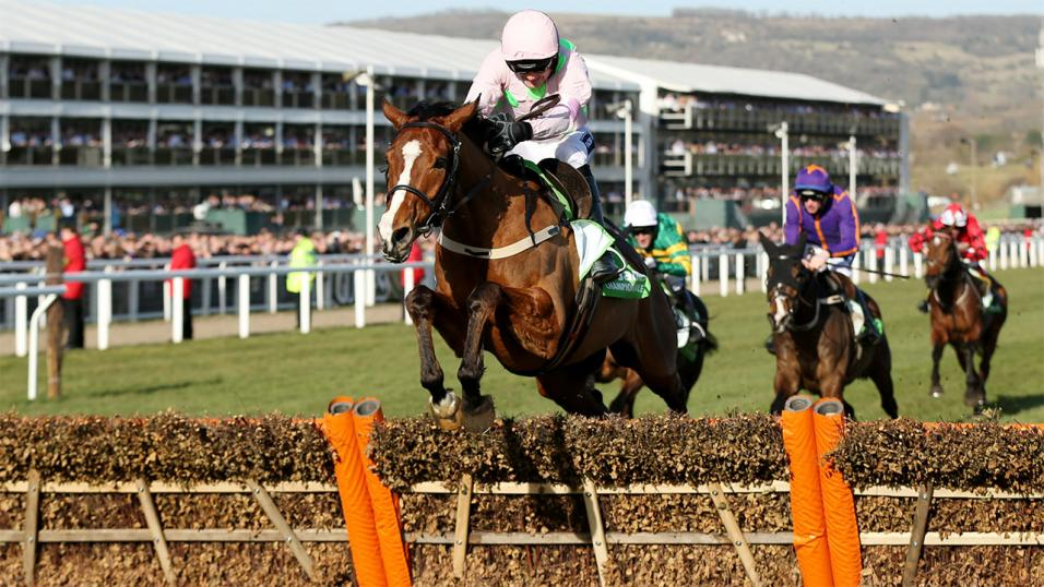 Faugheen at the Cheltenham Festival