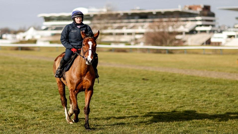Faugheen at Cheltenham