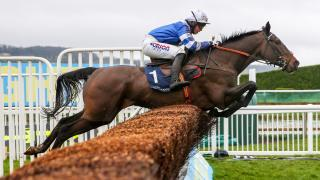 Jumps horse Frodon