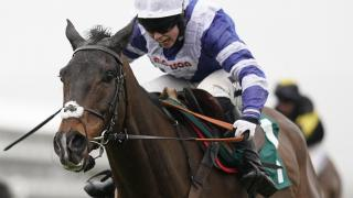 Jumps racehorse Frodon