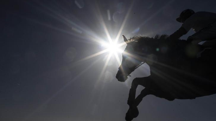 Horse jumping in sunshine