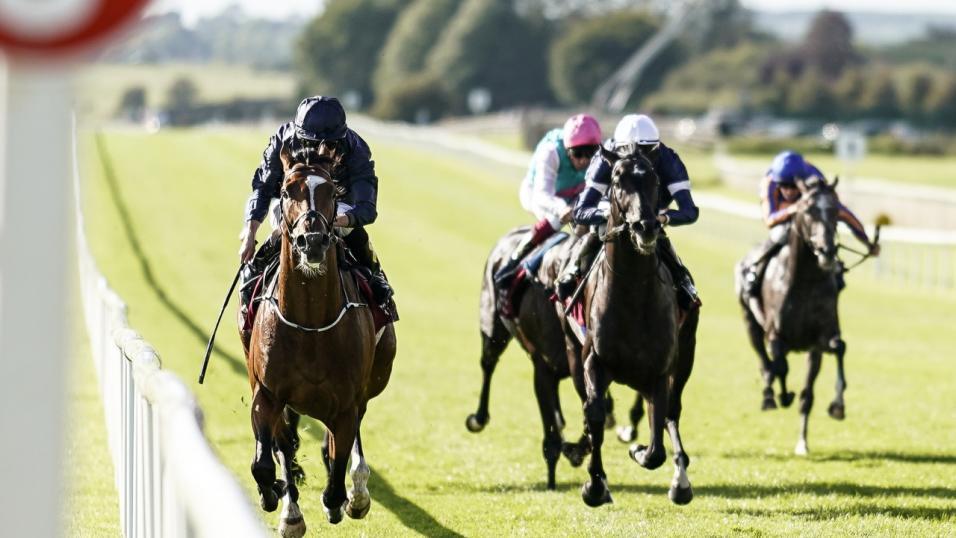 Roscommon races betting sky betting premiership football