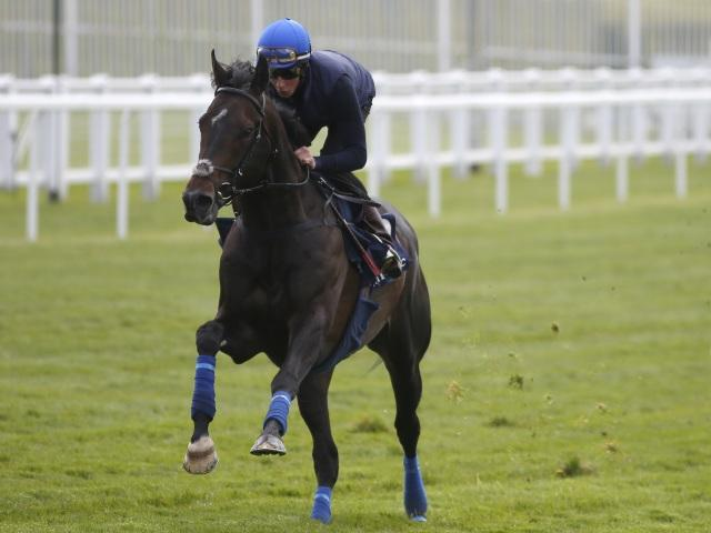 Jack Hobbs has been all the rage for the Champion Stakes but Tony Keenan thinks the Irish might hold sway