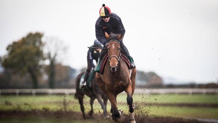 Laurina on the gallops