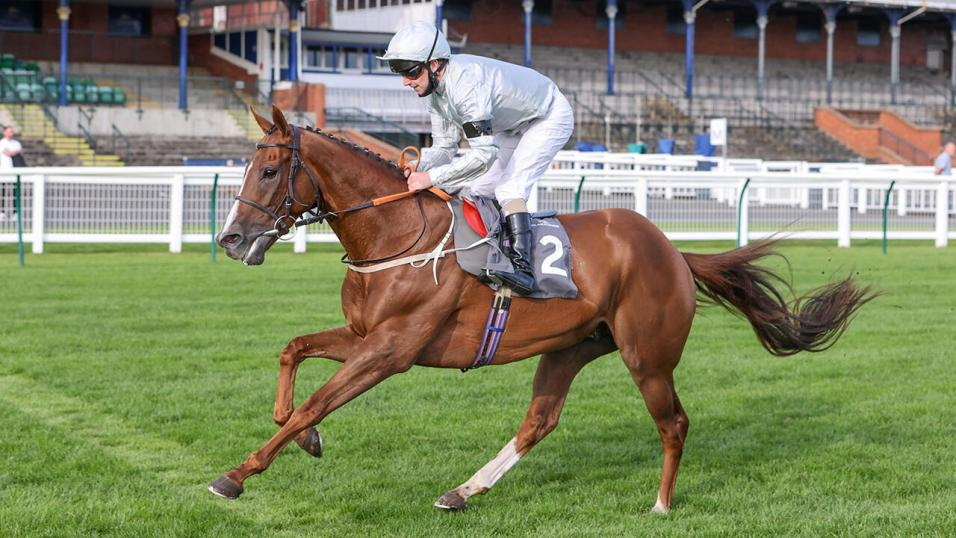 cesarewitch betting 2021 election