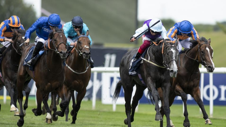 Best horse to bet on at ascot ipl betting 2021