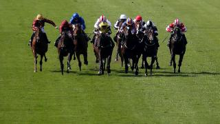 Closing stages at Newmarket