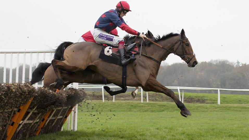 Tony Calvin expects Elgin to go close in the Greatwood Hurdle at Cheltenham on Sunday