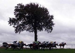 Plumpton is the venue for two of today's FTM selections
