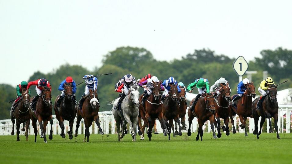 Queen anne stakes oddschecker betting staking plan for place betting