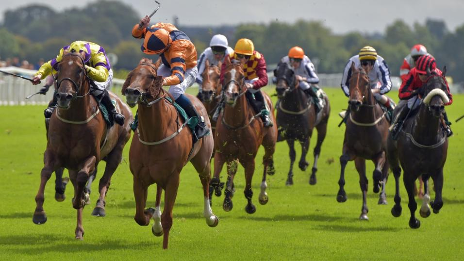 stratford horse racing betting odds