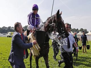 Will Ryan Moore (above) be celebrating in Ascot sunshine on Saturday?