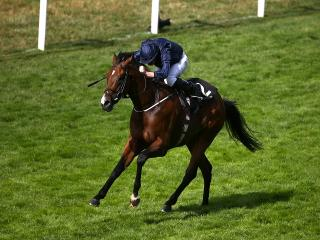 Ryan Moore, pictured here on day three winner War Envoy, is featured twice in today's FTM