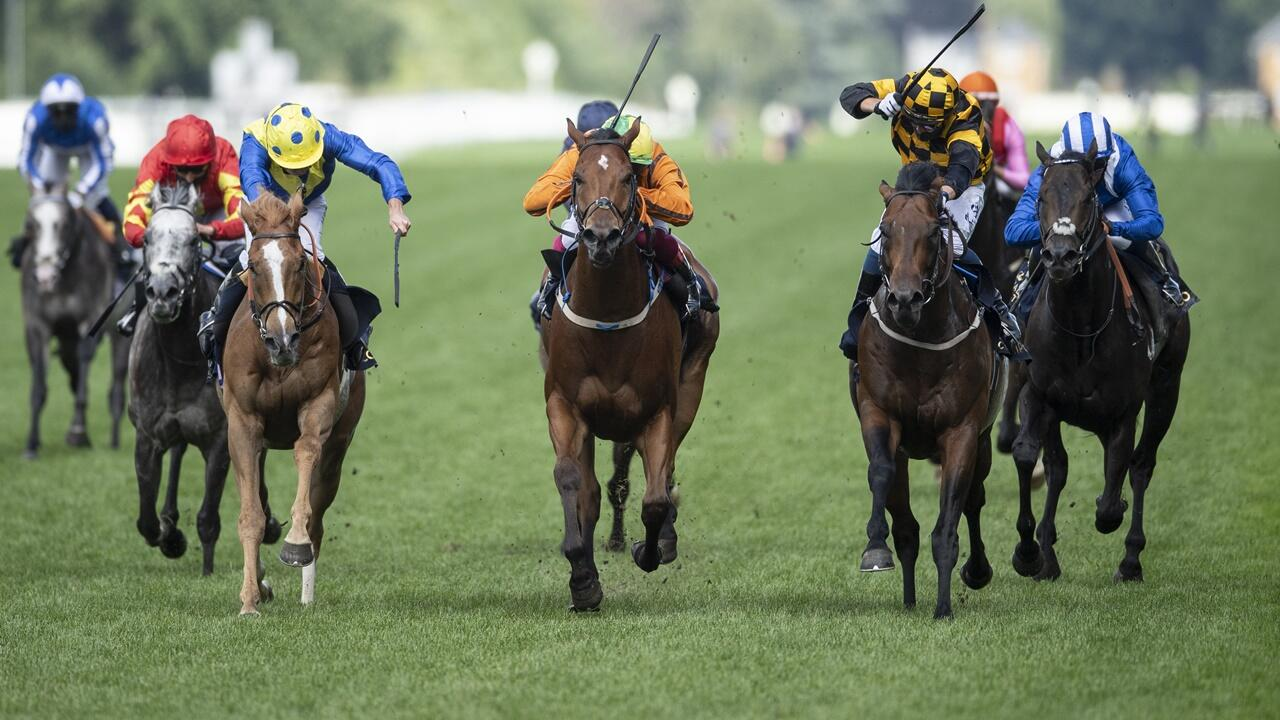 Best horse to bet on at ascot rules for blackjack betting rules