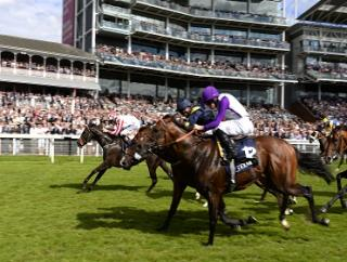 Sole Power, pictured at York, is 'the form choice'