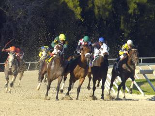 Timeform bring you three bets in the US on Saturday