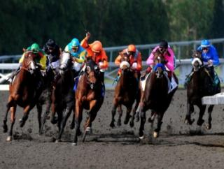 Timeform's US team have picked out three bets