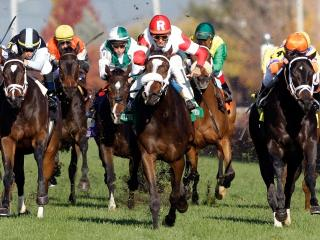 Timeform bring you three bets in the US on Friday