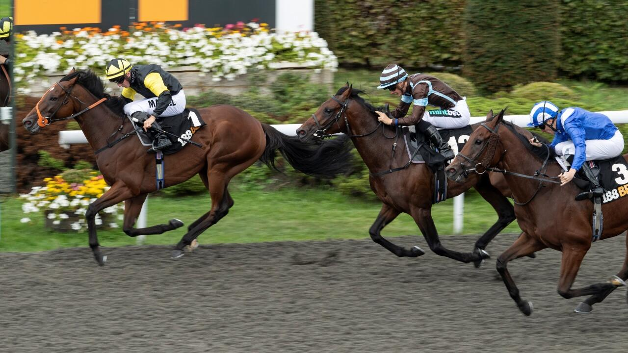 Horse racing 101 bettingadvice betting odds democratic nomination 2021