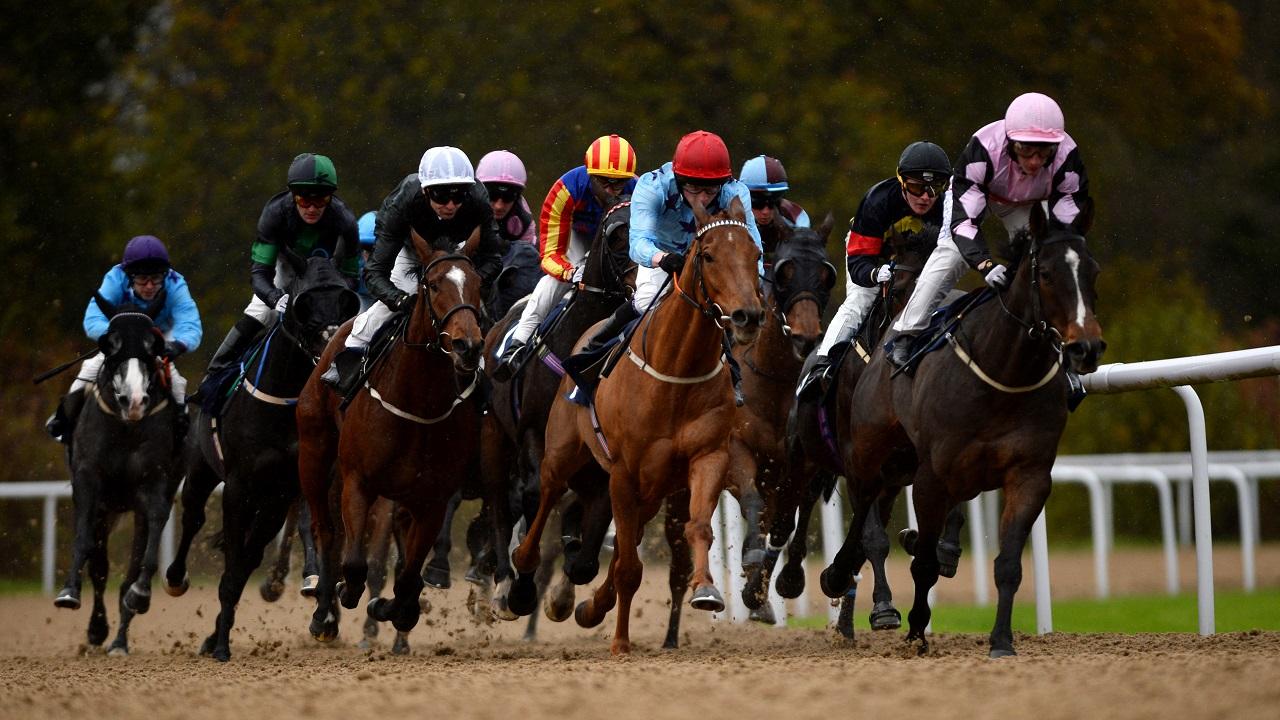 horse racing betting odds wolverhampton