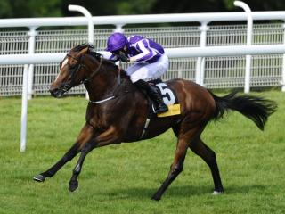 King George winner Highland Reel is in action at Meydan on Saturday