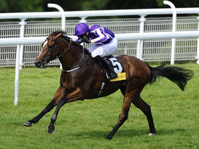 Highland Reel is among the leading contenders for Saturday's King George at Ascot