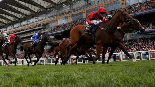 The Champion Stakes takes place at Ascot on Saturday
