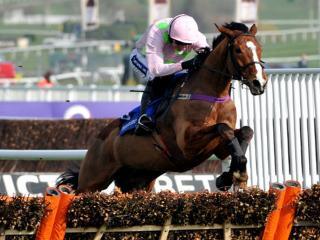 Has Faugheen drifted to a backable price for the Champion Hurdle after his first defeat?