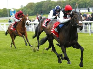 Derby winner Golden Horn stars in the Juddmonte International
