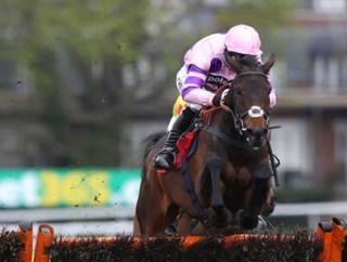 Paul's Ptit Zig is likely to go for the JLT Chase at Cheltenham