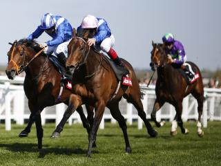 Muhaarar has the form to win the French 2000 Guineas