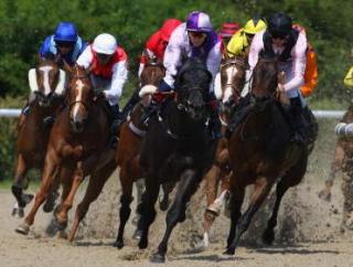 Wolverhampton is the venue for all four of today's FTM picks